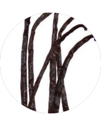 Living Libations Vanilla Essential Oil 2.5ml